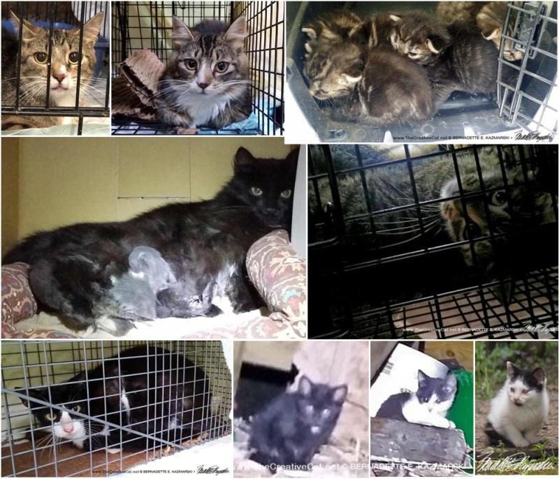 Dunbar cats collage.