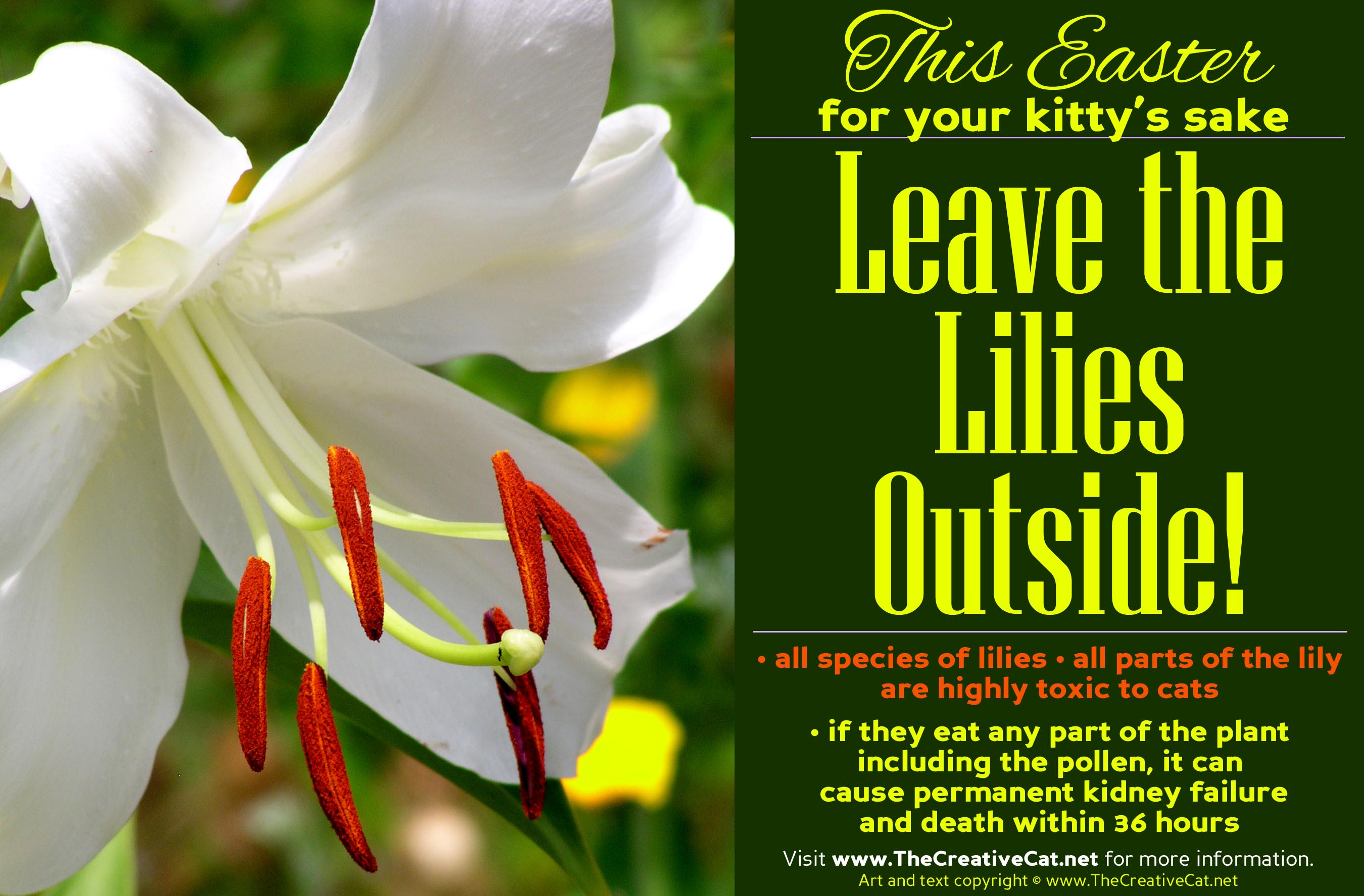 And Dont Forget Leave The Lilies Outside The Creative Cat