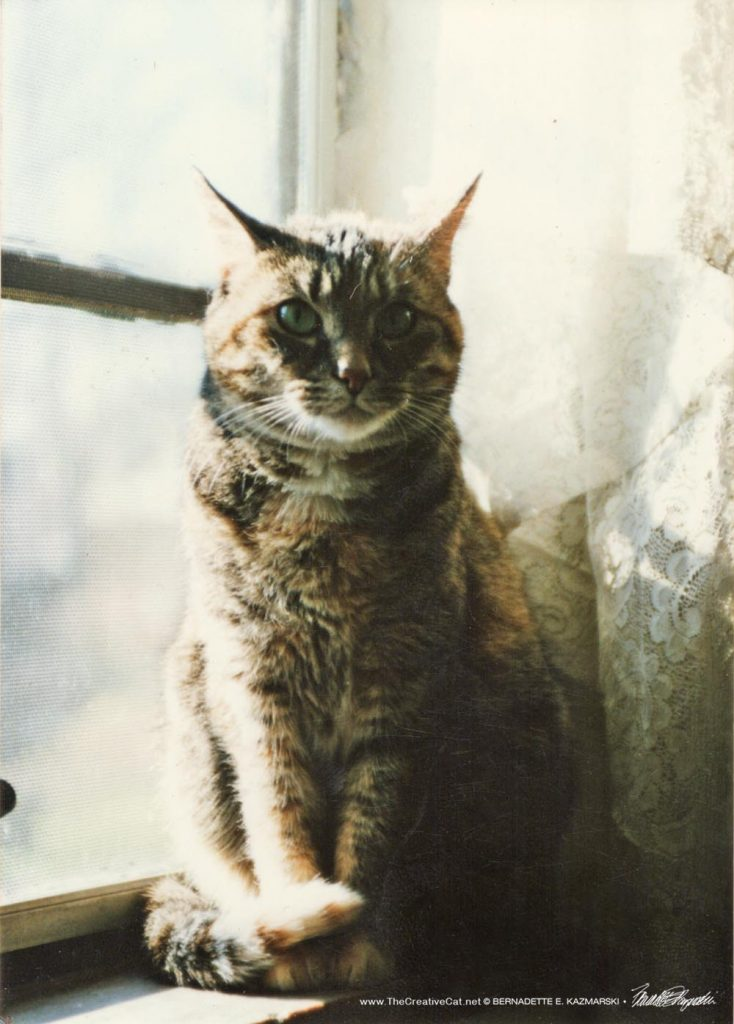 A skeptical Fawn