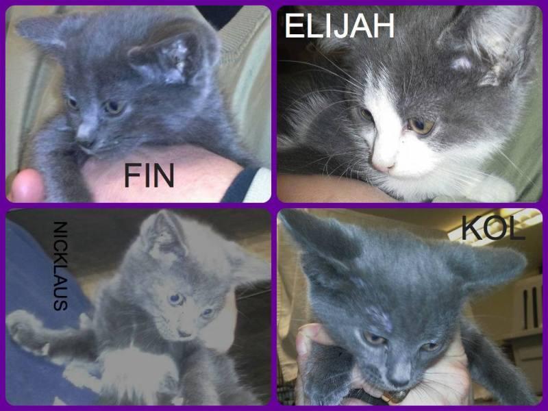 Fin, Elijah,