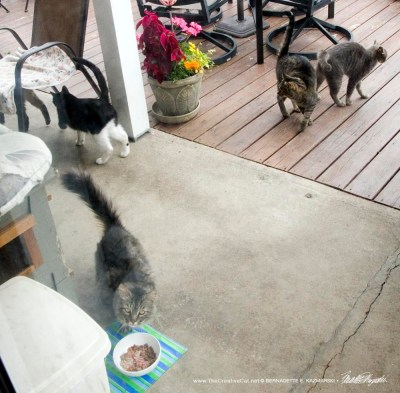 feeding feral cats