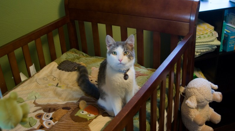 gray and white cat in crib