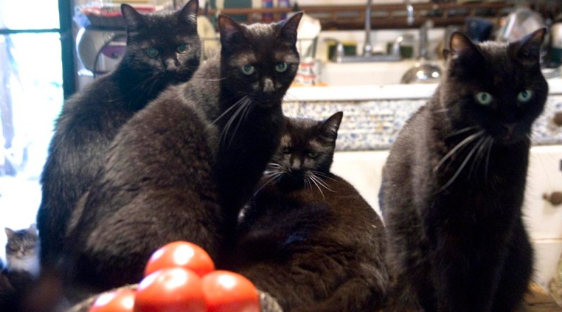 four black cats and one tabby