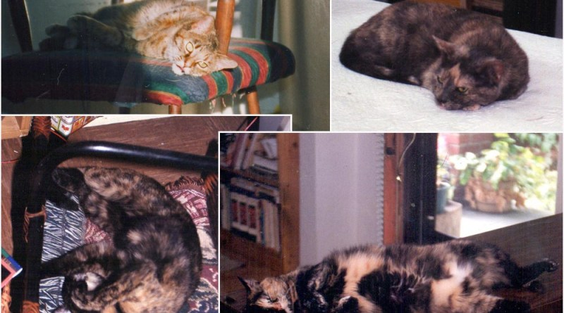 My four torties, 1998.