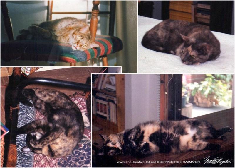 My four torties, 1998.