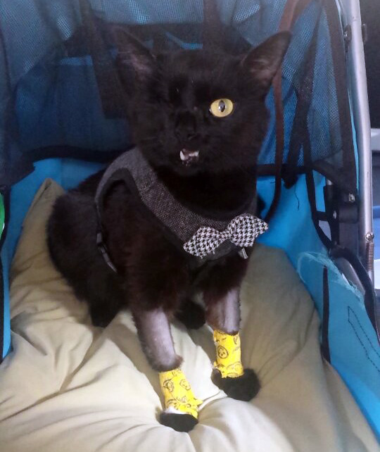Franken looking dapper after his transfusion.
