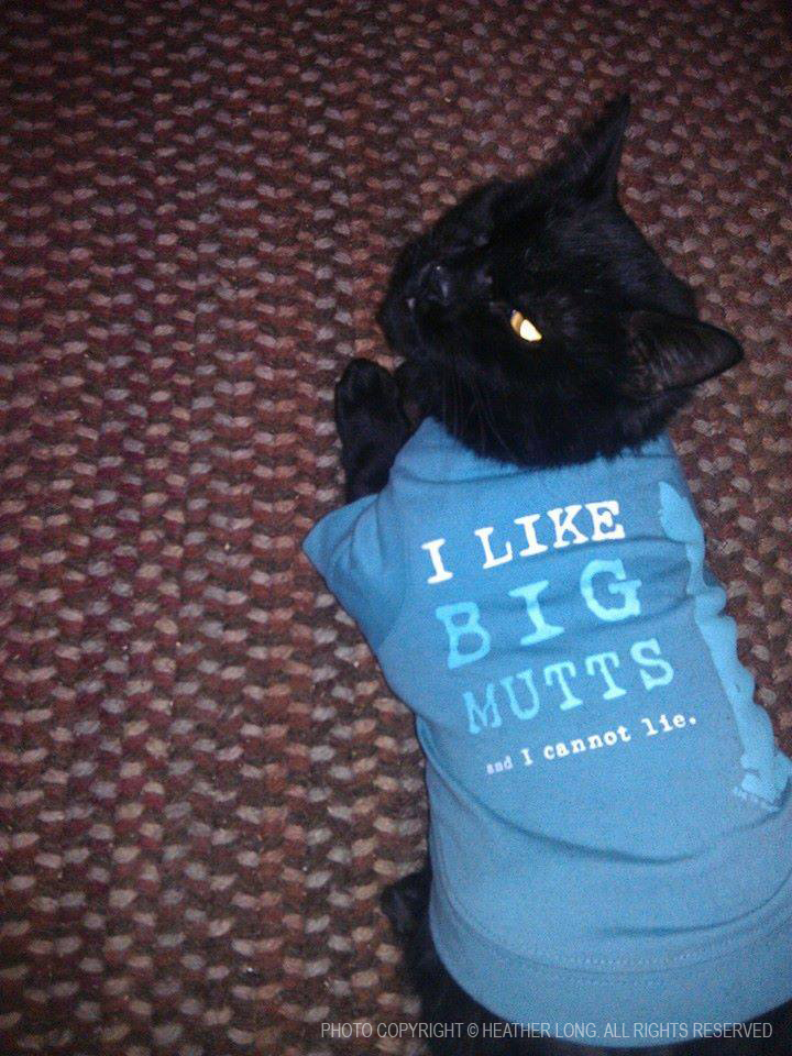 black cat with shirt