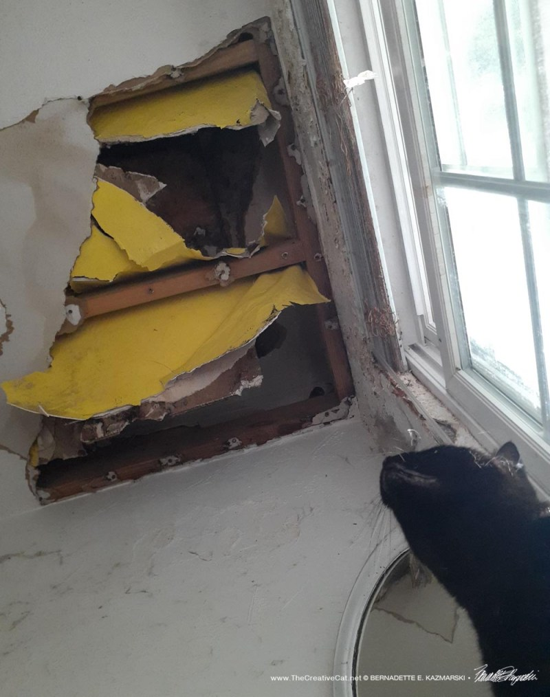 Black cat looking at hole in ceiling