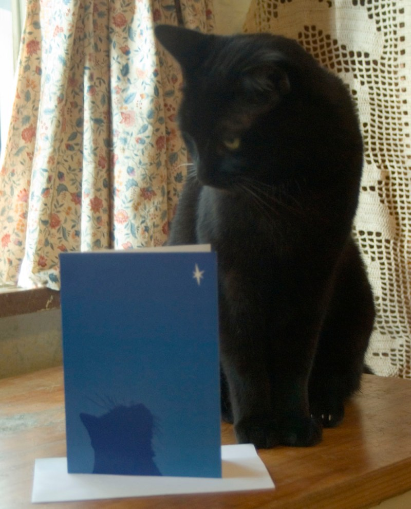 Giuseppe thoughtfully ponders the meaning of this card.