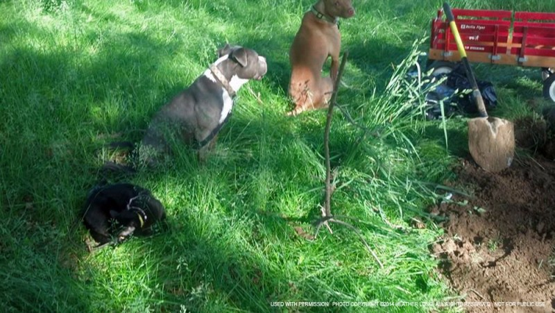 two dogs and black cat at dog grave