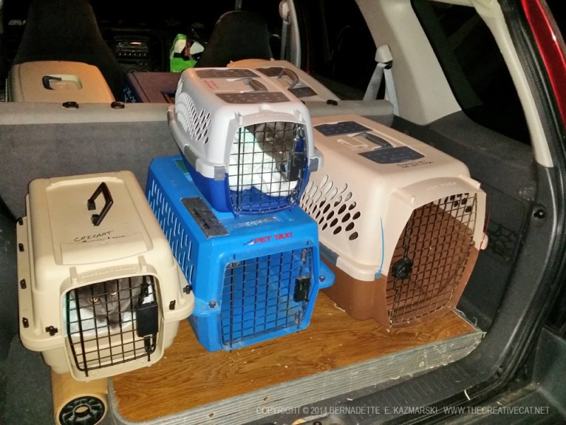 cat carriers inside car
