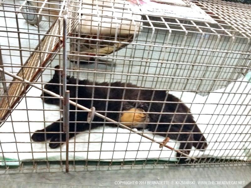 black kitten in cage