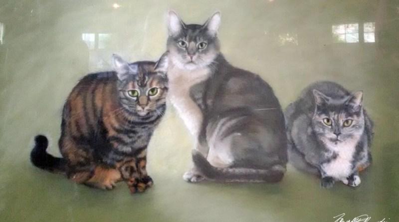 Tigger, Simba and Tribecca, the sample portrait cats.