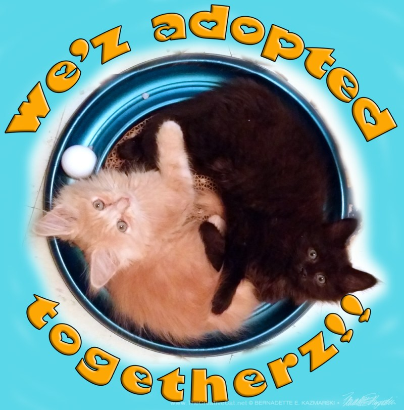 We'z adopted—togetherz!