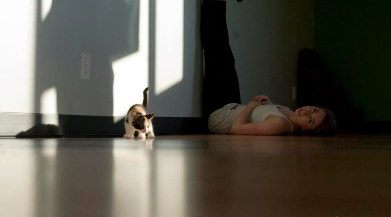 Avant kitten.