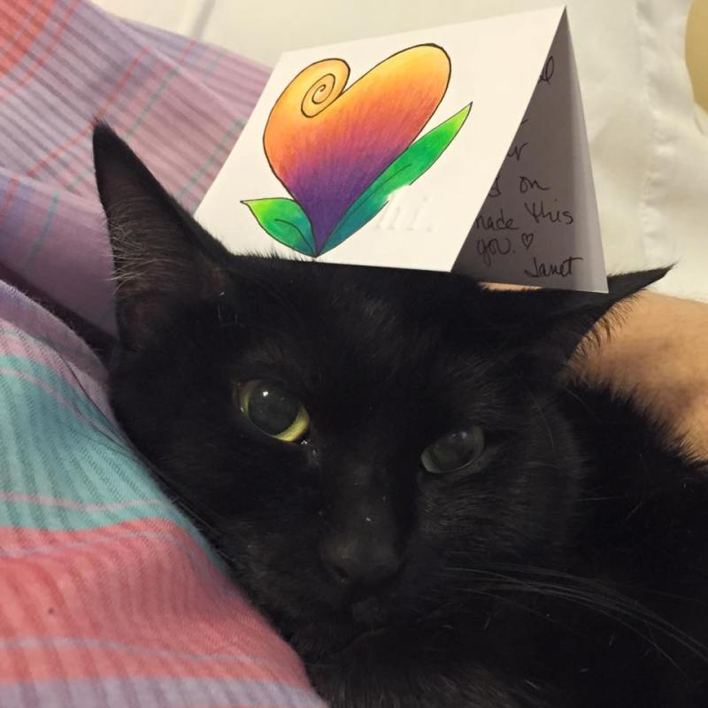 black cat with card