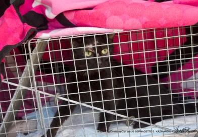 black cat in trap