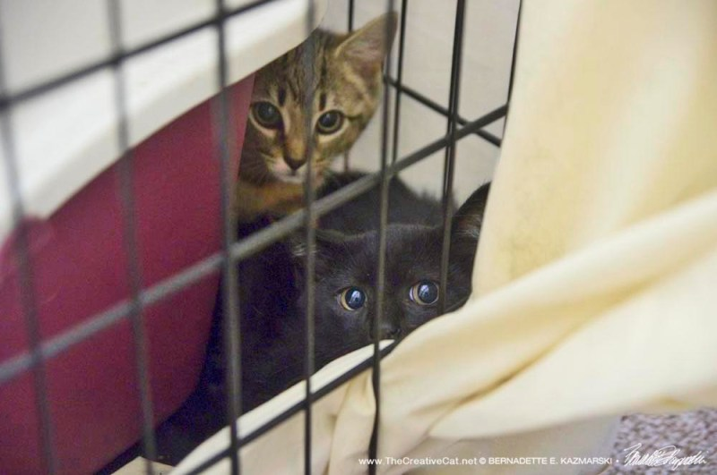 Two kittens in crate.