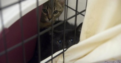 two kittens in crate