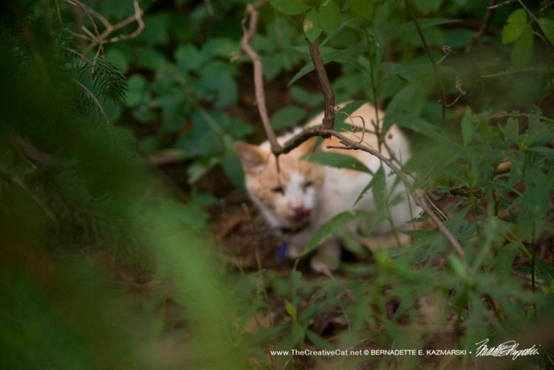 Jaspurr in the weeds.