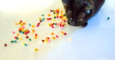 Jelly Bean meets his namesake.