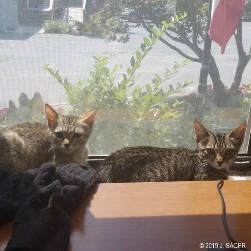 Two kittens enjoying the sun.