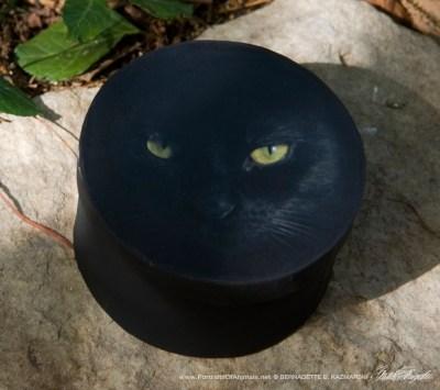"""The Eye Model"" keepsake box."