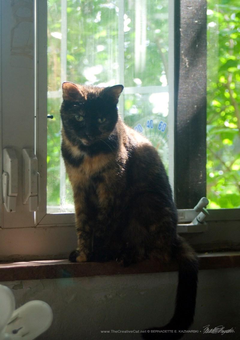 Kelly on the windowsill.