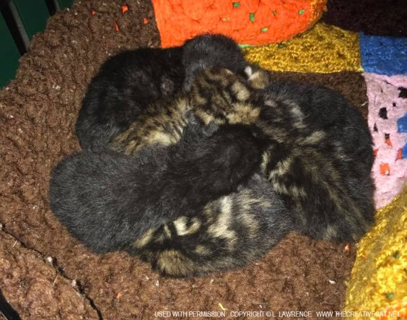 A little pile of rescued kittens.