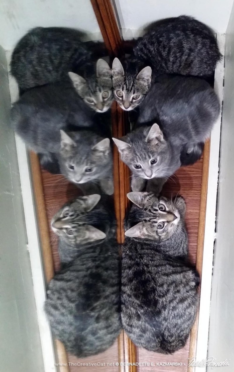 Kittens lined up and reflecting in a mirror.