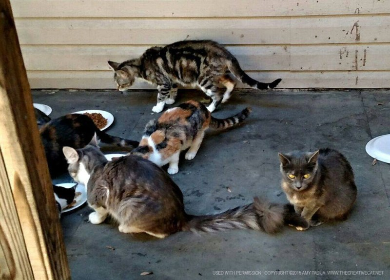 Some of the cats eating.