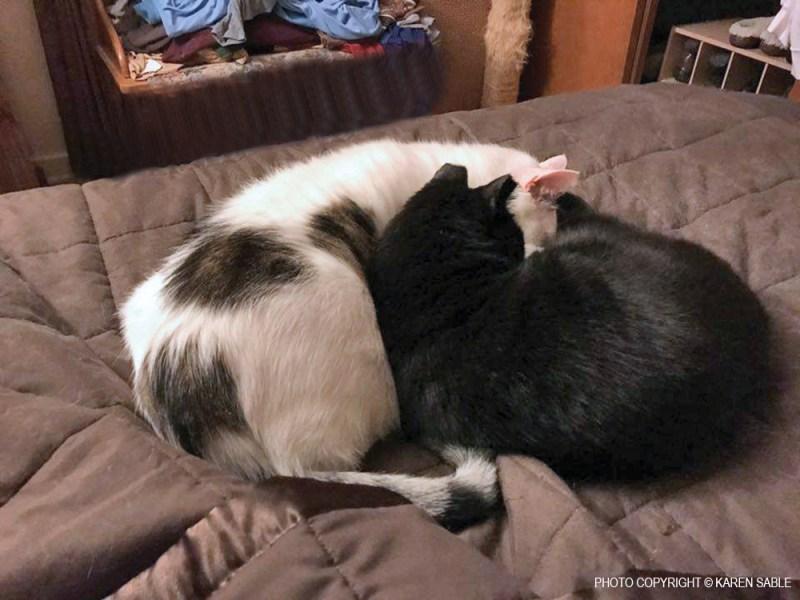 Koda and Boyfriend