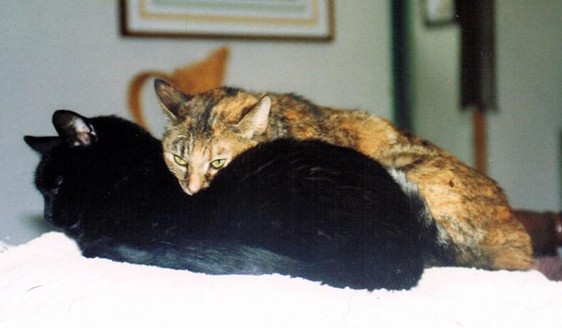 black cat and torbie cat