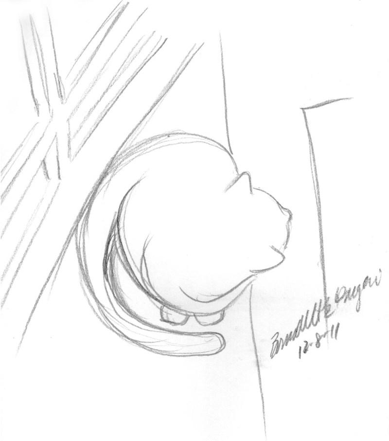pencil sketch of cat looking out door