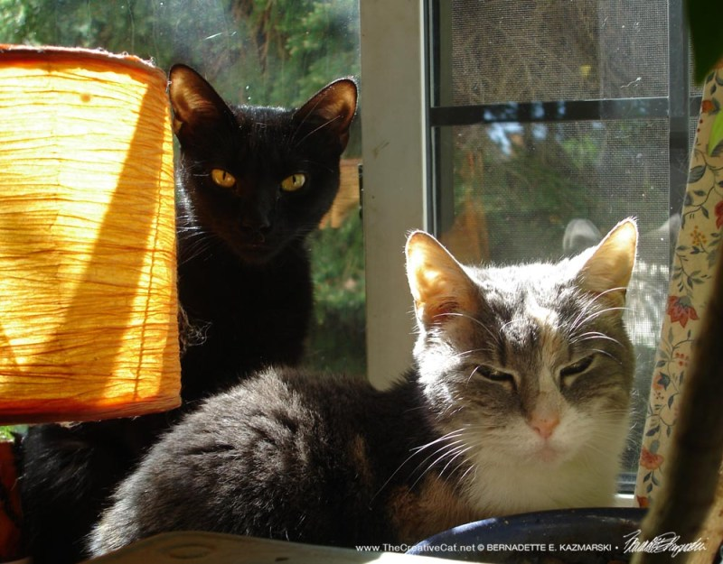 Lucy and Peaches enjoy the sun.