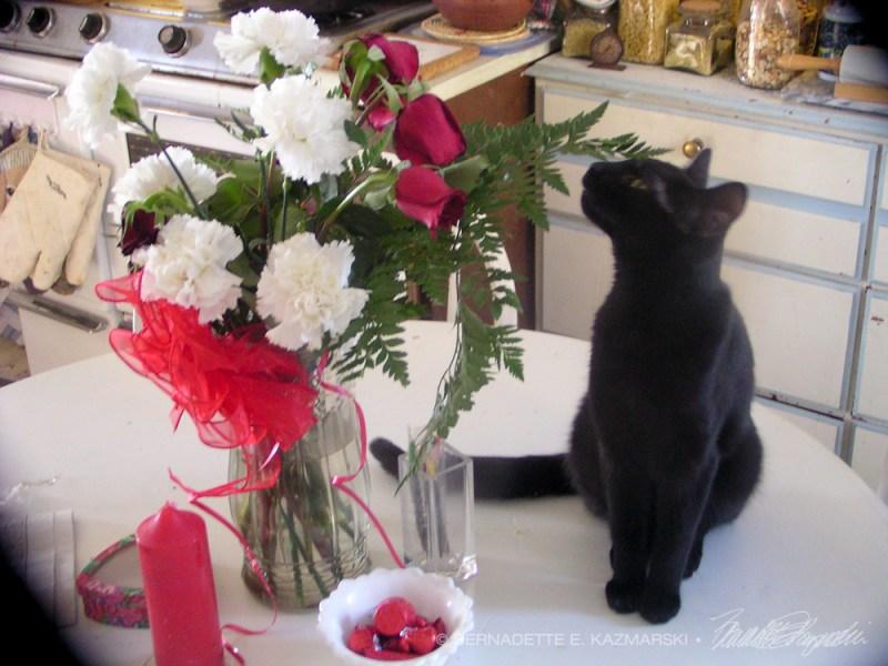 black cat with valentine flowers