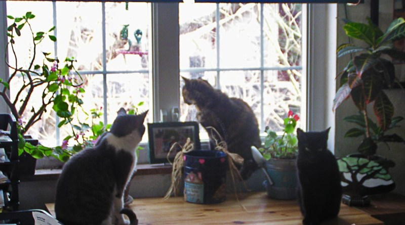 Namir, Cookie and Lucy enjoying the window while I enjoy them.