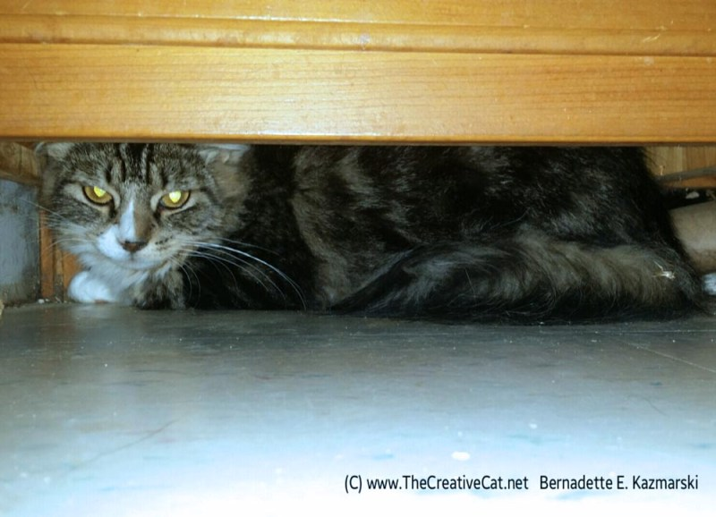 Under the cabinet.