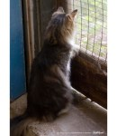 tabby and white cat at door