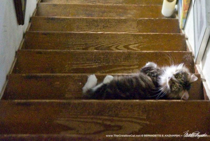 tabby cat on steps