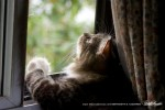 tabby and white cat at window