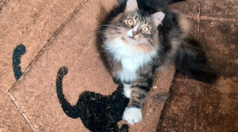 Mariposa shows us how to use the cat mat.