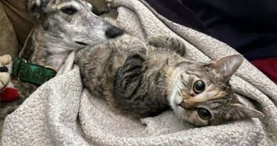 Cats for Adoption: Maude and Her Research Into Hominids