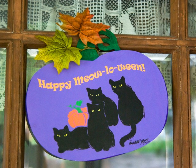 Greet Meow-lo-ween guests!