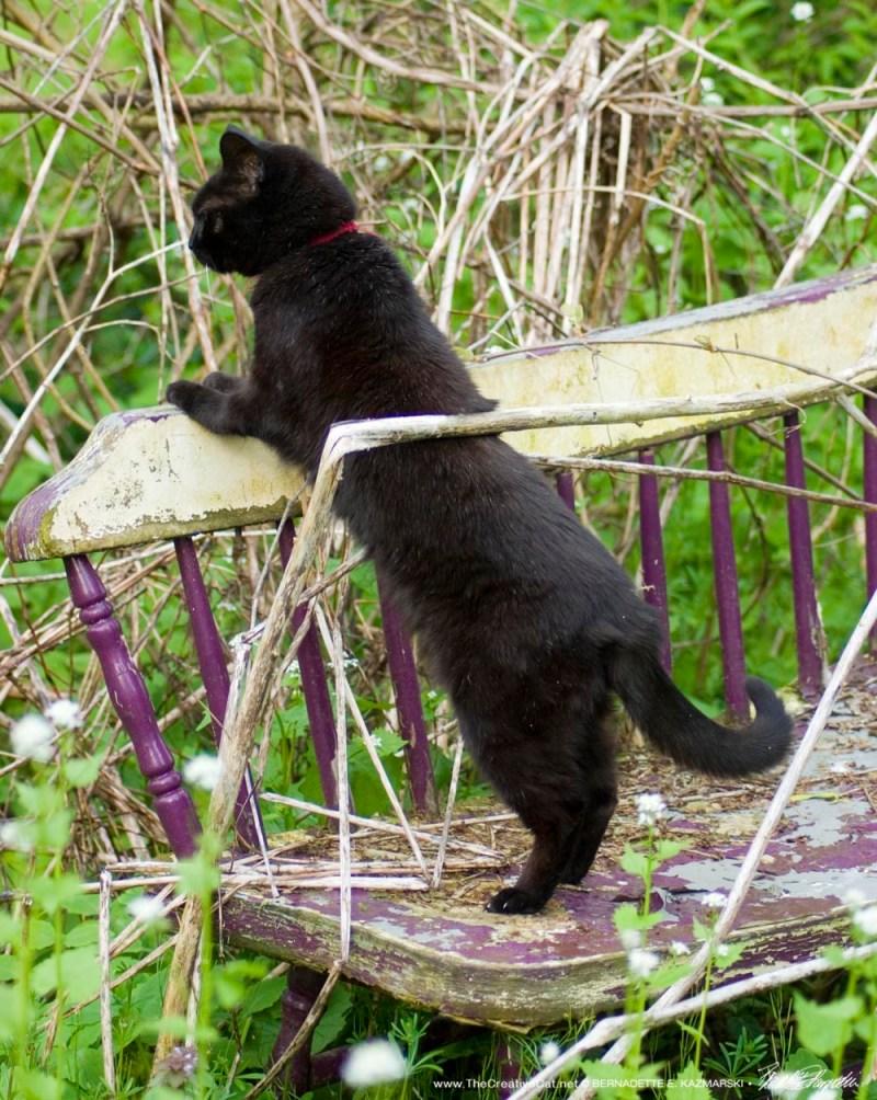 black cat in garden