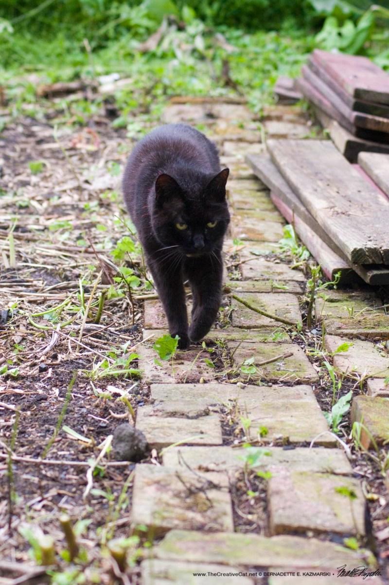 black cat on brick path