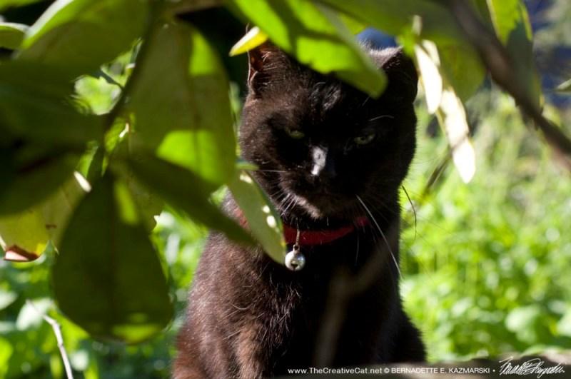 black cat under rhododendron