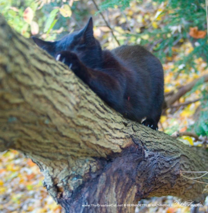 Not every kitty is as lucky as Mimi to have a tree of her own to scratch at will.