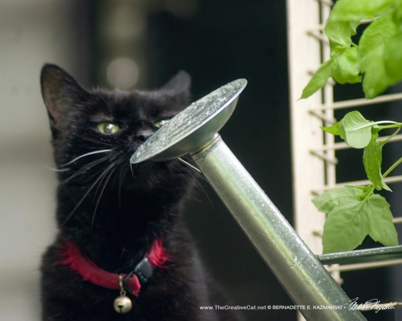 blackcat with watering can
