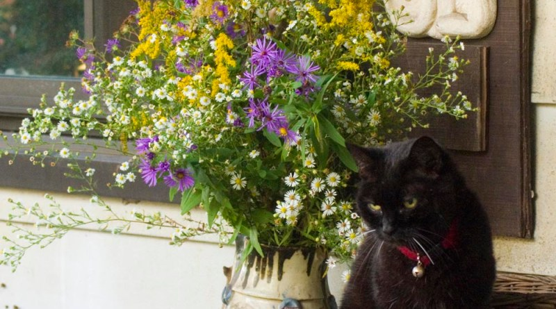 cats and wildflowers